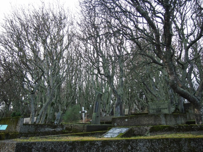 There are many trees in Hólavallagarður