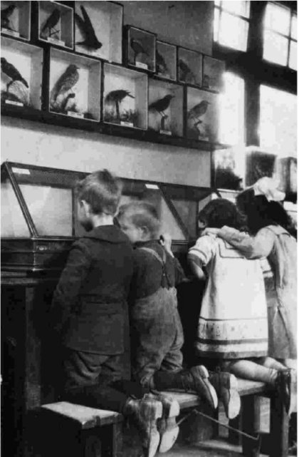 Children viewing specimens at the Nature Study Museum (image from [])