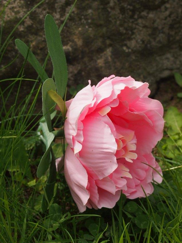Flower left on Meg's grave
