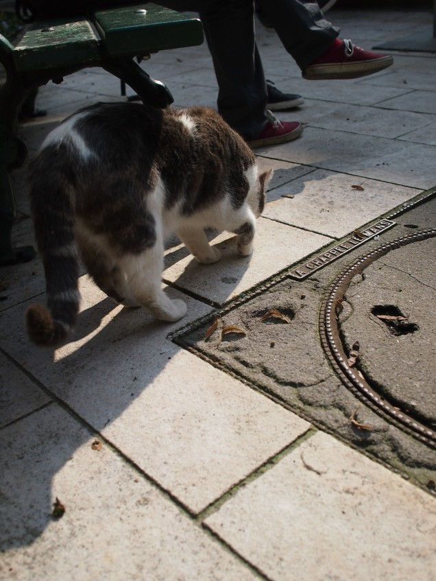 One of the many cats of Montmartre Cemetery