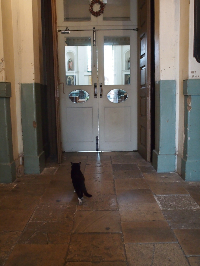 Schrödinger the cat waits outside the church doors